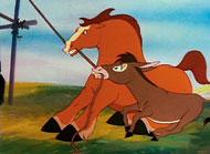 Kinderfilm Pferde