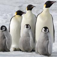 Die Reise der Pinguine 2&lt;br /&gt;&lt;br /&gt;&lt;br /&gt;&lt;br /&gt;&lt;br /&gt;<br />